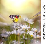 Stock photo butterfly on the flower 128172647