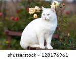 Stock photo white cat in garden with roses 128176961