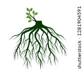 tree roots and germinate limb.... | Shutterstock .eps vector #1281904591