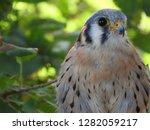 close up head portrait american ... | Shutterstock . vector #1282059217