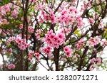 pink rhododendron flower | Shutterstock . vector #1282071271