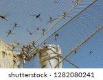 dragonflies entangled in the...   Shutterstock . vector #1282080241