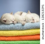 Stock photo three sleeping british baby kittens on colorful towels 128213291