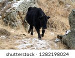 caucasian cattle breeding ... | Shutterstock . vector #1282198024