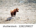 caucasian cattle breeding ... | Shutterstock . vector #1282198027