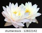 Two White Lotus On Black...