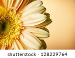 Yellow Gerbera Flower On Yellow ...