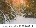sunset in winter snow pine fir...   Shutterstock . vector #1282340914