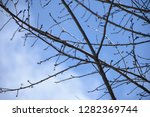 tropical tree and sky... | Shutterstock . vector #1282369744