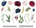 watercolour floral illustration ... | Shutterstock . vector #1282452634