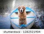 dog in a boat in beautiful... | Shutterstock . vector #1282521904