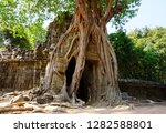a tree entwined into part of a... | Shutterstock . vector #1282588801