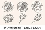 rose ornament vector by hand... | Shutterstock .eps vector #1282612207