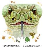 dragon snake horoscope...   Shutterstock . vector #1282619134