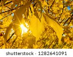 through the autumn leaf and the ... | Shutterstock . vector #1282641091