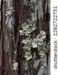 Grow Mushrooms On Logs And...