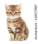 Stock photo one british shorthair brown kitten cat isolated 128277887