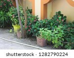 plants in the ground on the... | Shutterstock . vector #1282790224