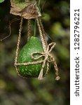 round tracery bottle gourd...   Shutterstock . vector #1282796221