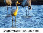 common crane birds in the... | Shutterstock . vector #1282824481
