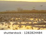common crane birds in agamon... | Shutterstock . vector #1282824484
