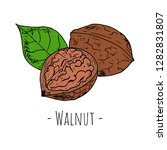 hand drawn isolated walnut on a ... | Shutterstock .eps vector #1282831807