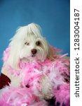 dog photo shoot. beautiful... | Shutterstock . vector #1283004187
