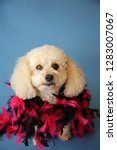 dog photo shoot. beautiful... | Shutterstock . vector #1283007067