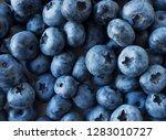 fresh blueberry background.... | Shutterstock . vector #1283010727