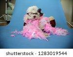 behind the scenes dog photo... | Shutterstock . vector #1283019544