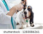 midsection of doctor examining... | Shutterstock . vector #1283086261