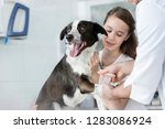 girl looking at veterinary... | Shutterstock . vector #1283086924
