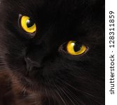 Stock photo black cat looking to you with bright yellow eyes 128311859
