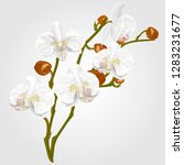 flower white orchid watercolor. ... | Shutterstock .eps vector #1283231677