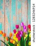 Tulip Blossom Flowers On...