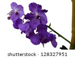 beautiful purple orchid on white | Shutterstock . vector #128327951