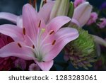 pink flower florist bouquet... | Shutterstock . vector #1283283061