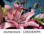 pink flower florist bouquet... | Shutterstock . vector #1283283094