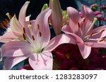 pink flower florist bouquet... | Shutterstock . vector #1283283097