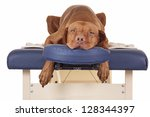 Stock photo pure breed golden color dog laying relaxed on a massage table isolated on white background 128344397