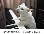 Stock photo cat play piano 1283471671