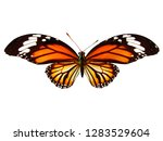 Stock photo natural orange butterfly isolated on white background 1283529604