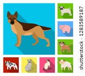 vector design of animal and... | Shutterstock .eps vector #1283589187