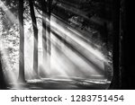 black and white image of... | Shutterstock . vector #1283751454