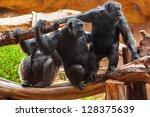 Monkeys In Park At Tenerife...