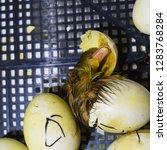 hatching of eggs of ducklings... | Shutterstock . vector #1283768284
