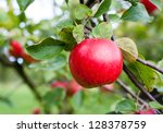 red apple growing on tree.... | Shutterstock . vector #128378759