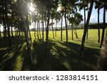 lot of palm trees grow on a...   Shutterstock . vector #1283814151