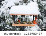 Northern Cardinals  House Finch ...