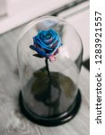live rose in a blue glass flask ... | Shutterstock . vector #1283921557